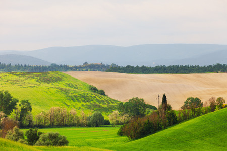 Summer rural landscape in Tuscany, Italy photo