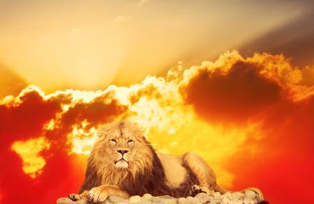 lion adulte se trouve contre le lever du soleil lumineux