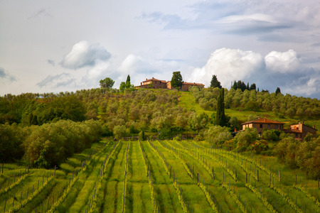 tranquillity: Rural landscape with vineyards in Tuscany, Italy Stock Photo