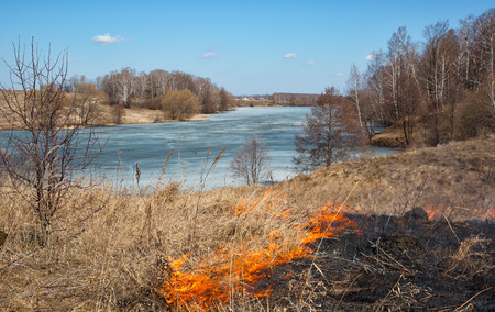 burning bush: burning last years dry grass in the spring on the river bank