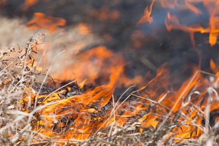 burning bush: burning dry grass close up Stock Photo