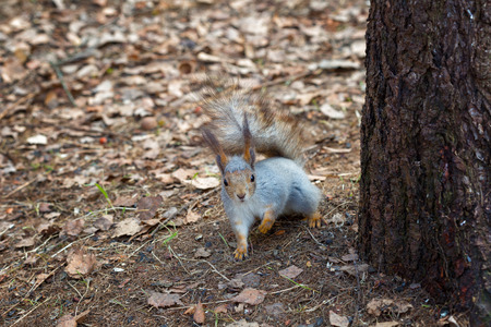 squirrel sits near a tree and looks at the photographer photo