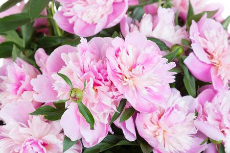 pfingstrosen: Blumenstrauß aus rosa Pfingstrosen Lizenzfreie Bilder