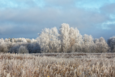 pacification: Winter landscape with the trees covered with hoarfrost