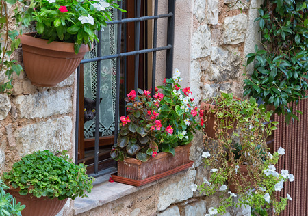 spello: Cat looking out the window, on the wall a lot of flower pots, Spello, Italy