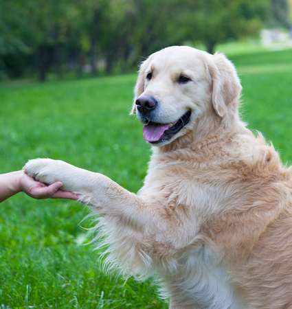 gives: Dog gives a paw to the person