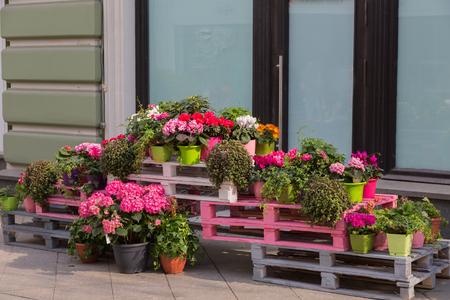 フラワー ショップの外の花