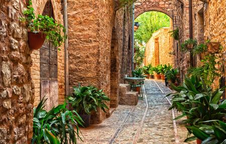 spello: Plants in pots on narrow street of the ancient city of Spello, Umbria, Italy Stock Photo