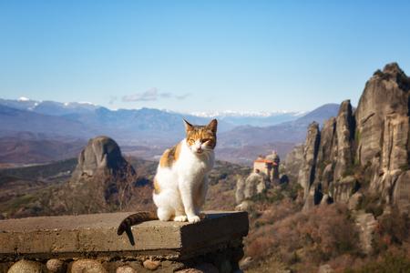 Cat and the Meteora monastery, Trikala region, Greece Stock Photo