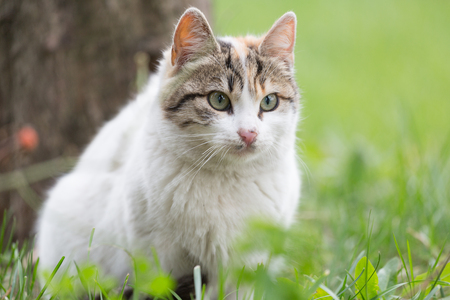 Street cat , close-up portrait Stock Photo