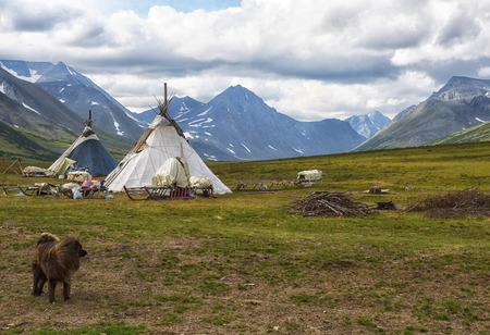 Dog outside the camps of Nenets reindeer herders nomads, Yamal