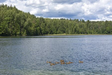 Summer landscape with a lake and ducks floating on the lake Stock Photo