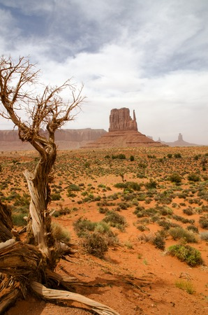 Big rocks in Monument Valley with dry tree