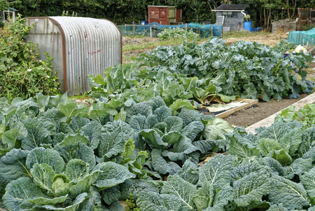sufficient: Allotment Garden where land is made available for personal cultivation of fruit and vegetables.