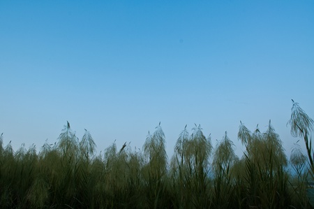 Grass and sky. Stock Photo - 8412785