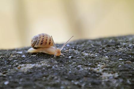 달팽이는 천천히 앞으로 돌로 움직입니다.