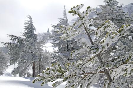 Winter wonderland in Kusatsu, Japan 写真素材