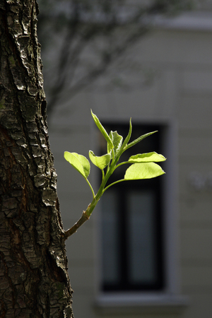 A fresh green branch growing from a tree in springtime