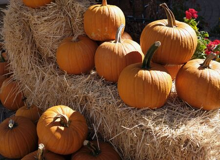 Thanksgiving and Halloween: Multiple pumpkins on and around stacks of hay