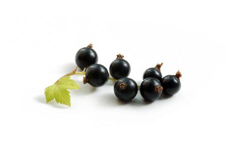 blackcurrant close-up Stock Photo