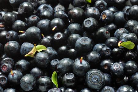 bilberry: bilberry background Stock Photo