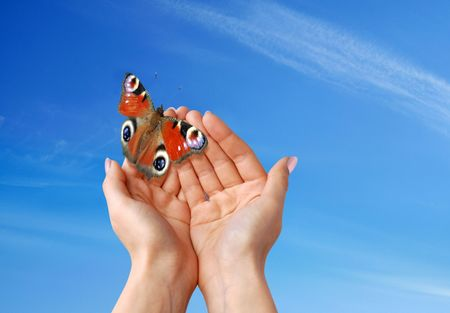 air animals: beautiful butterfly Stock Photo