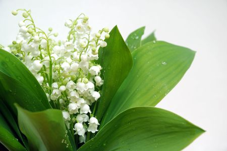 lily of the valley: bunch of lily of the valley Stock Photo