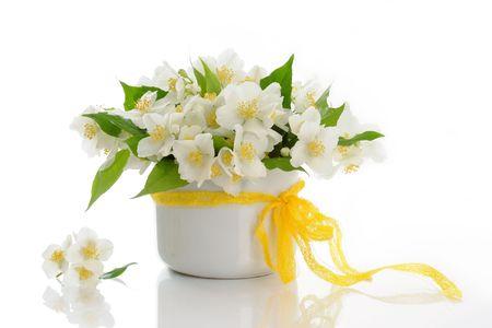 bunch of jasmine flowers Stock Photo
