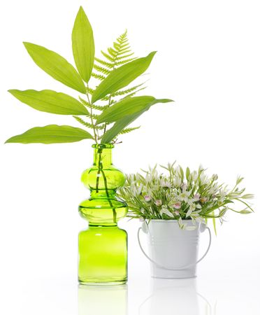 green vase and white bucket with plants photo