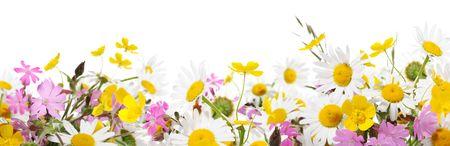 flower fields: wildflowers Stock Photo
