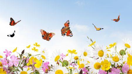 fleurs des champs: beaut� de la nature  Banque d'images