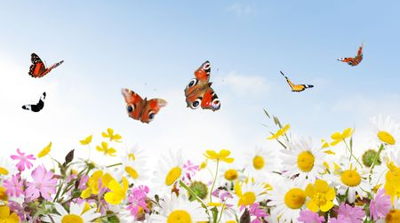 fiori di campo: bellezza in natura