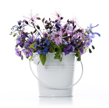 wildblumen: violette Blumen