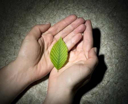 green leaf Stock Photo - 9797493