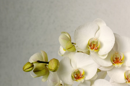 bunch up: beautiful orchids Stock Photo