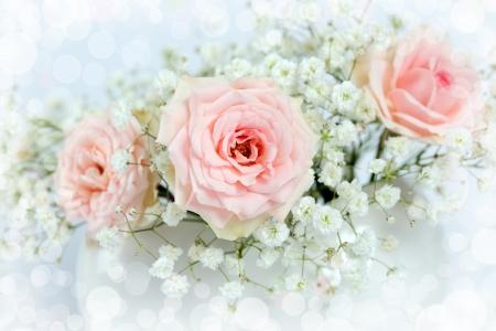 roses in vase: beautiful roses