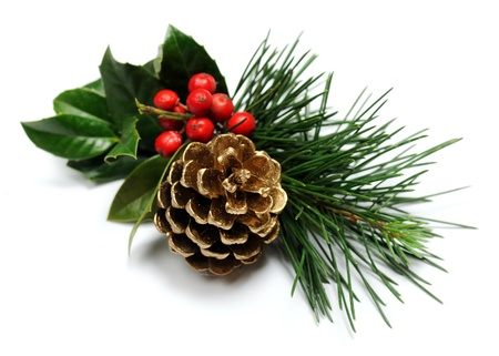 pine  fruit: Christmas decoration