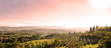 olive farm: beautiful tuscan landscape