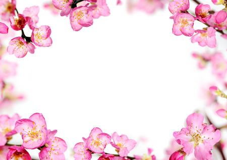 flor de durazno: flores de melocotón marco