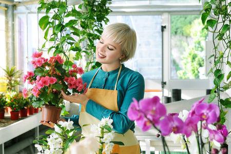 begonia: cheerful florist