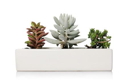 houseplants: small houseplants Stock Photo