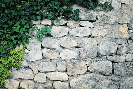 ivy wall: stone wall with ivy