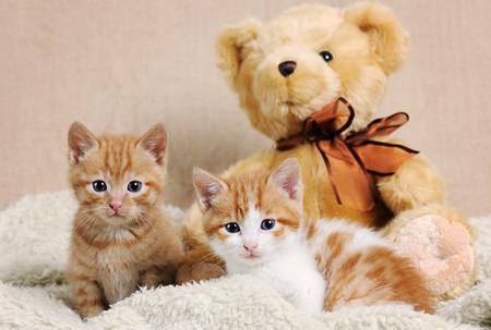 cute kittens: cute kittens Stock Photo