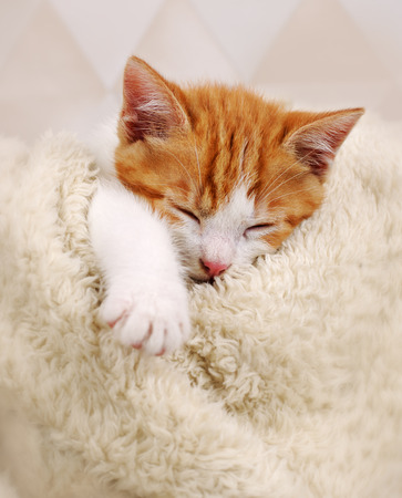 cute kittens: sleeping kitten