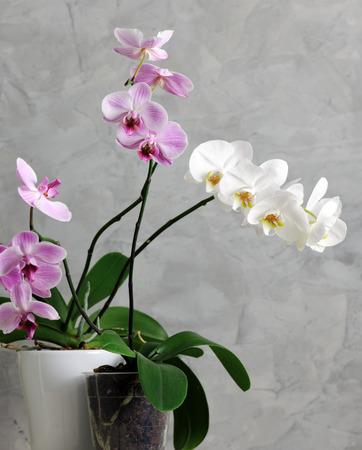 Twigs: beautiful orchids Stock Photo