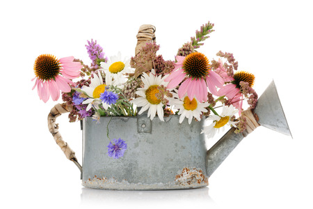 wildflowers: watering can with wildflowers