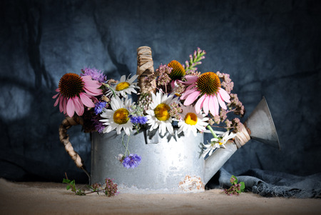 coneflowers: watering can with wildflowers