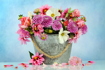 rosas rosadas: hermosas flores Foto de archivo