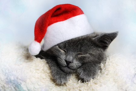 cute kitten: christmas kitten
