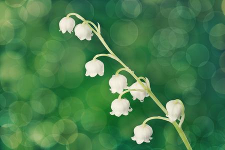 flor de lis: lirio del valle Foto de archivo